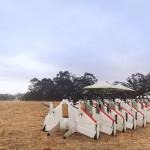 Google рассекретила летающих роботов-курьеров